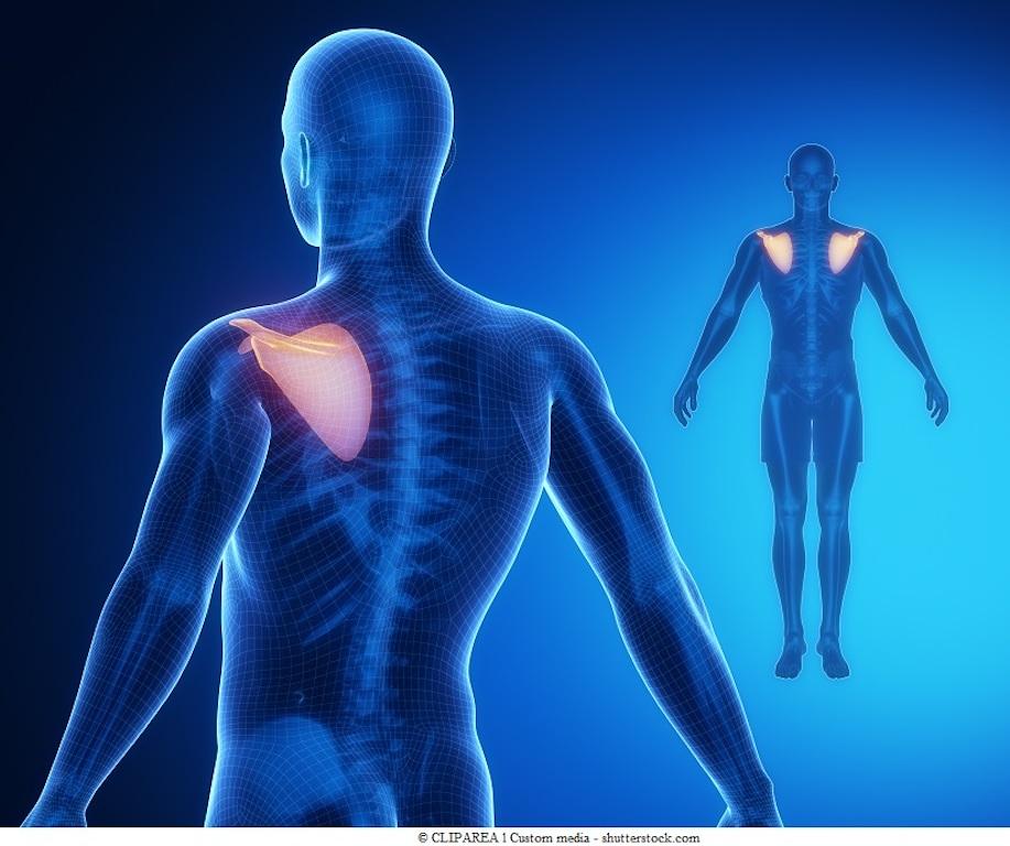 Dolore alla scapola spalla sinistra braccio e cuore