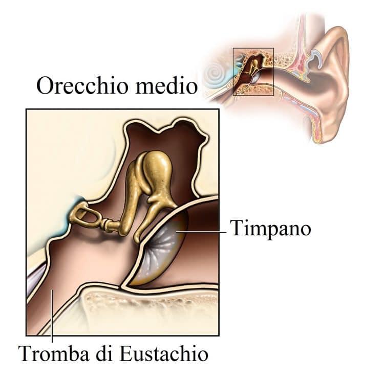 Orecchie tappate sintomi cause e rimedi per il catarro for Orecchie a sventola rimedi naturali per adulti