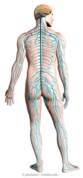 Dolore ai nervi,sistema nervoso