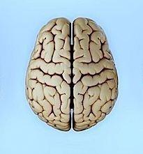 Cervello,encefalo,lobo,interno