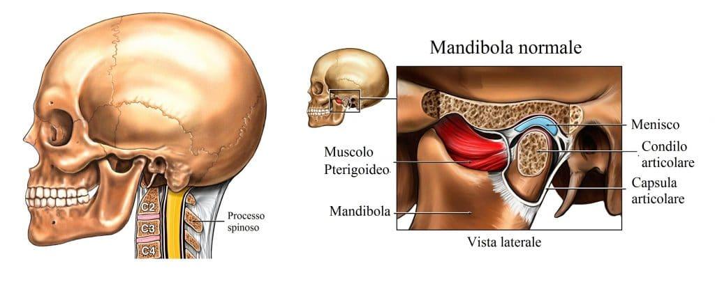 Mandibola,pterigoideo,orecchio