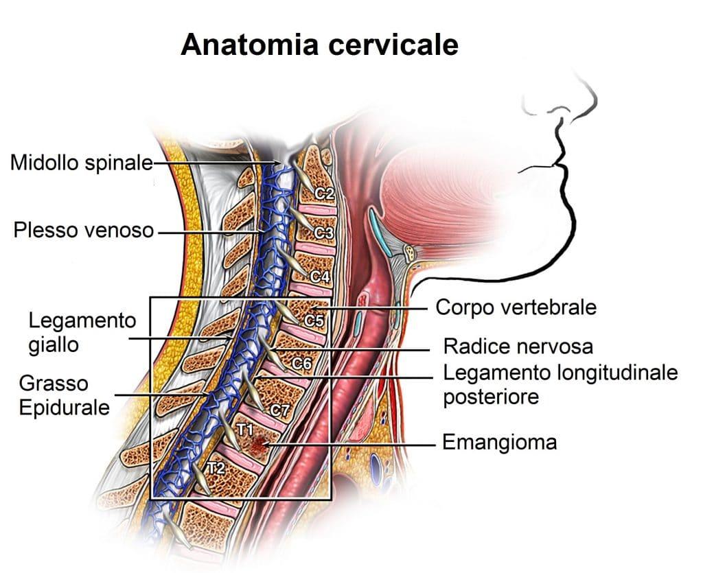 Midollo spinale cervicale