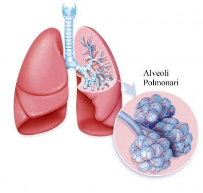 Alveolo polmonare,fumo,tabagismo