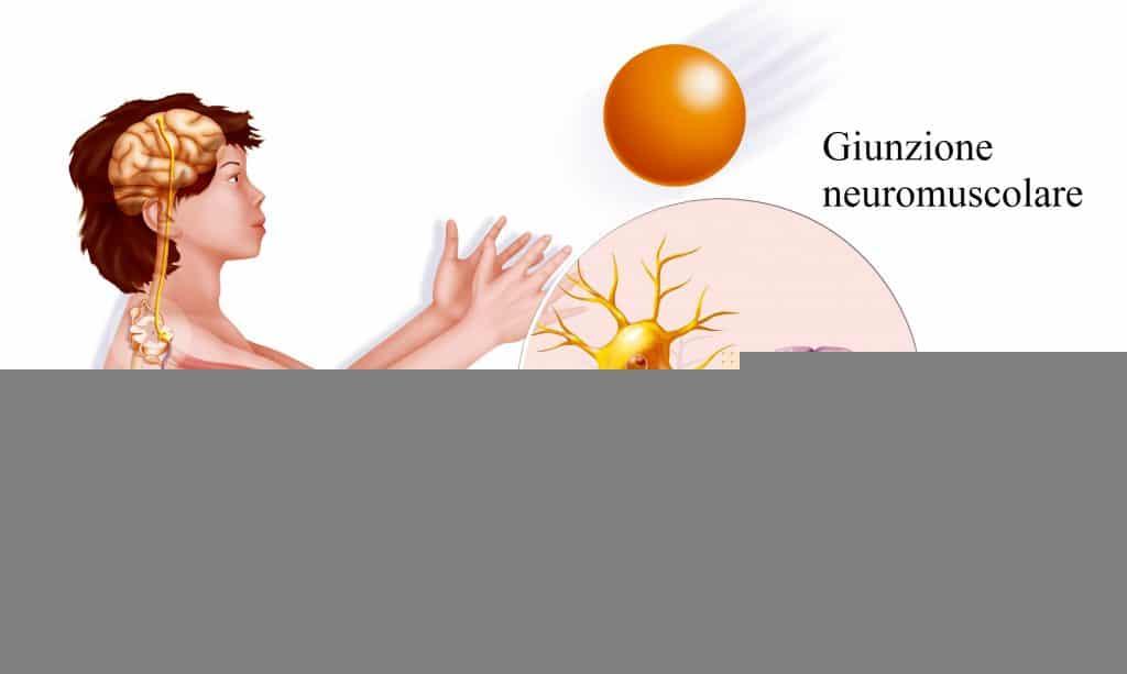 Placca neuromuscolare,neurone