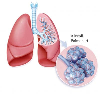Alveoli polmonari,sistema tampone