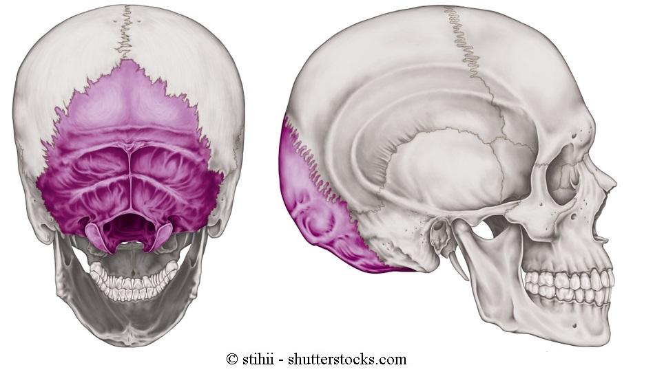 Osso Occipitale, Parietale e Temporale