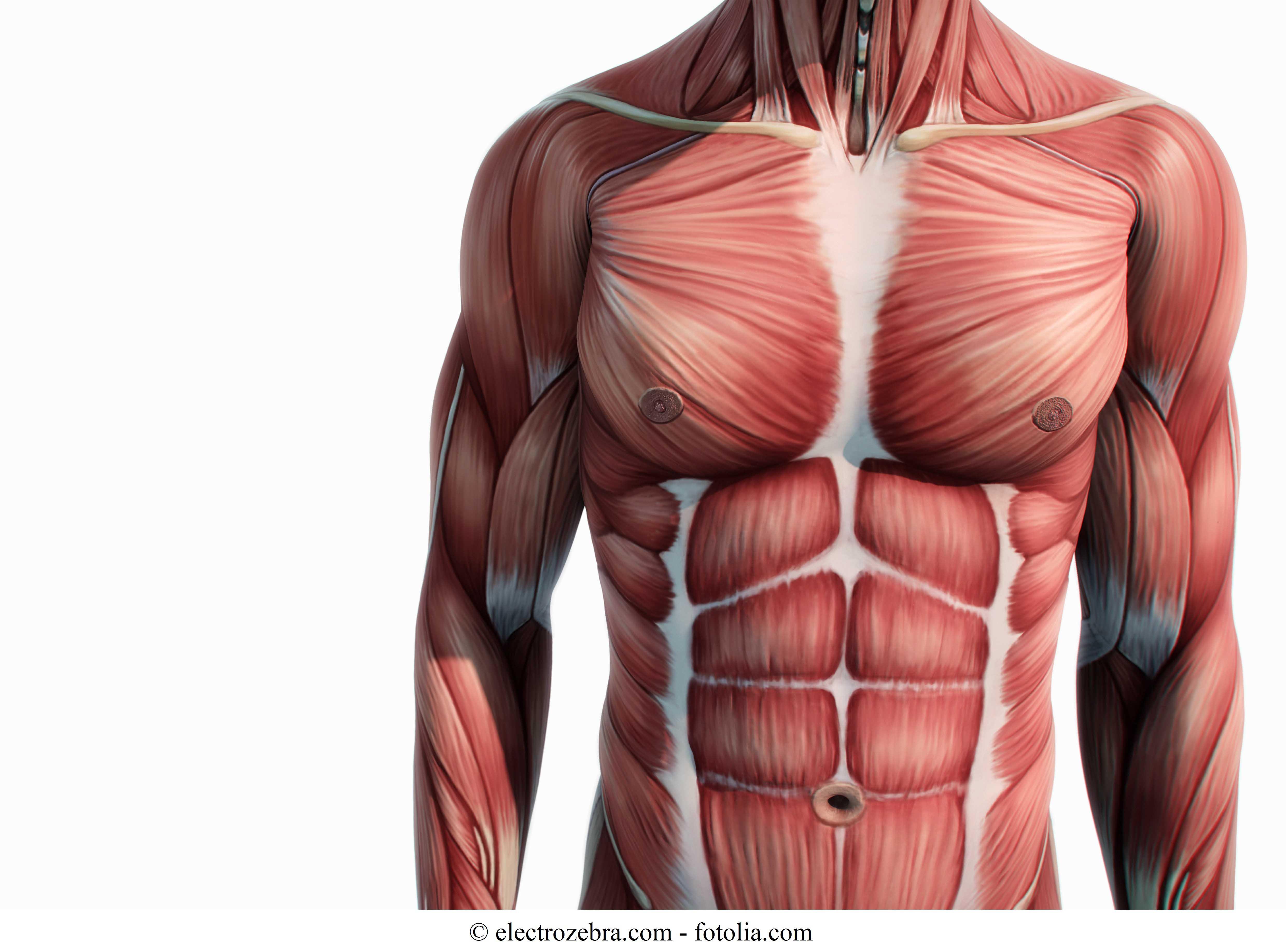 Muscoli Addominali, Psoas e Iliaco