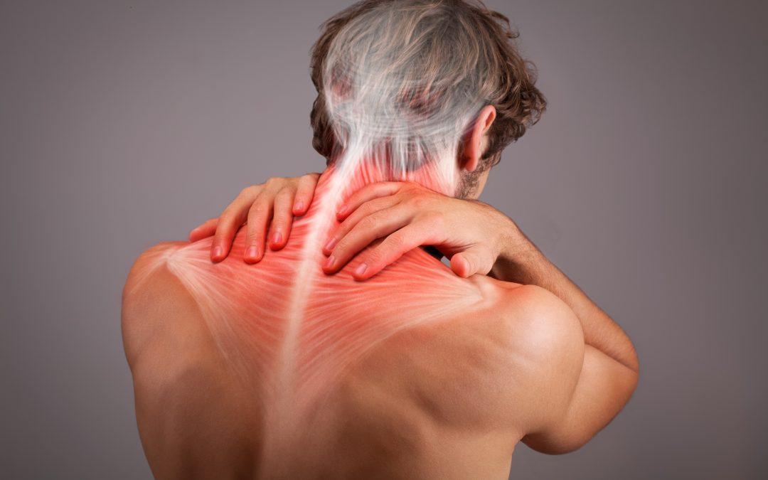 Muscoli del Collo e della Mandibola