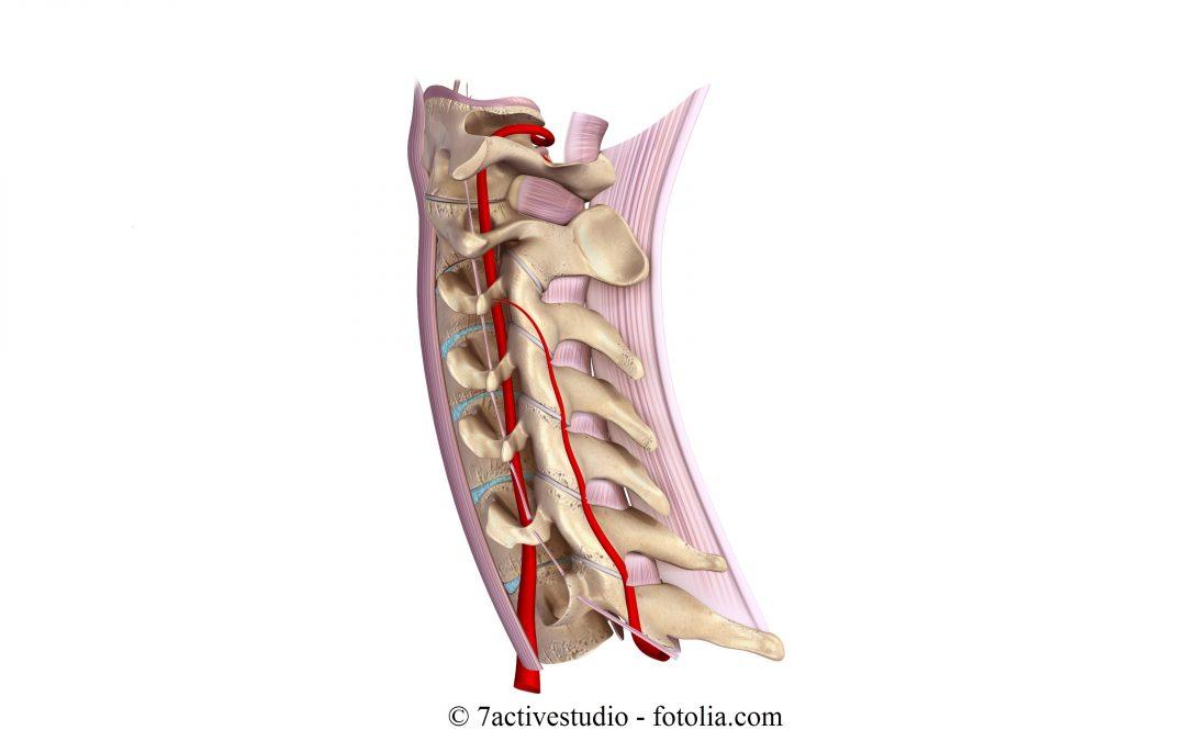 Anatomia del Collo