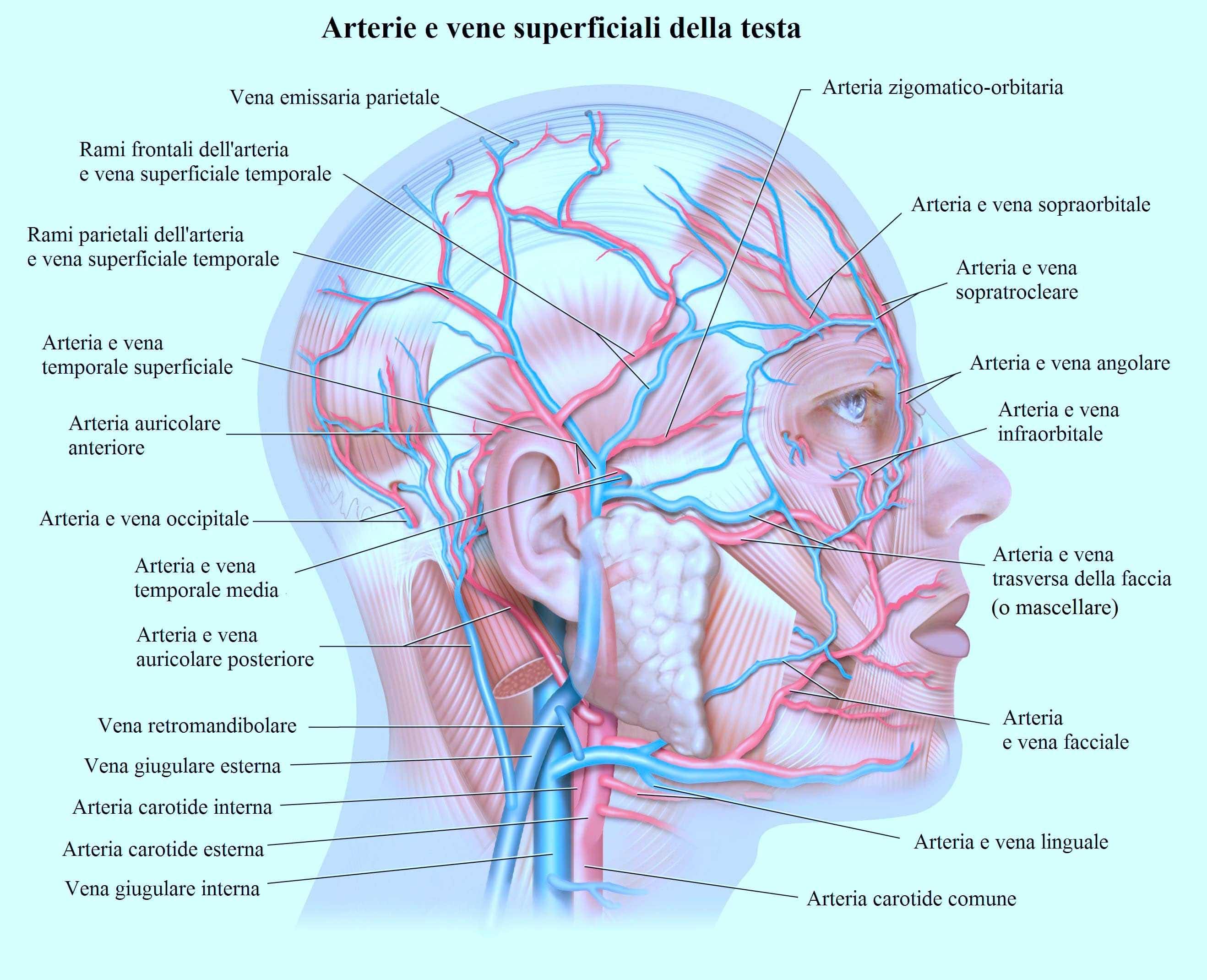 Wunderbar Magen Vene Anatomie Bilder - Menschliche Anatomie Bilder ...