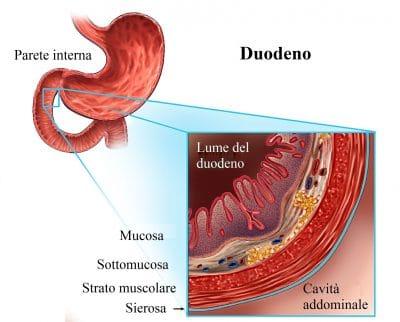 Stomaco,duodeno,interno,anatomia