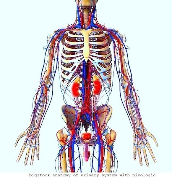 problemi di circolazione,vene,arterie