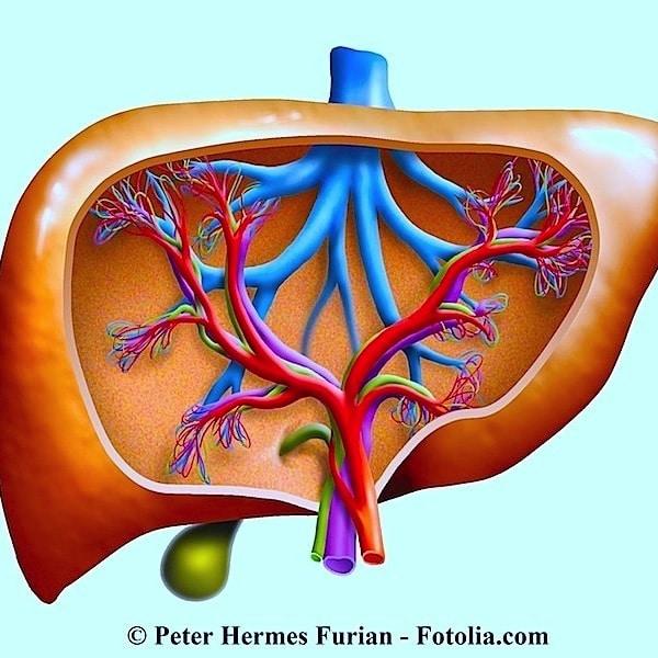 Malattie del fegato,epatite,cirrosi