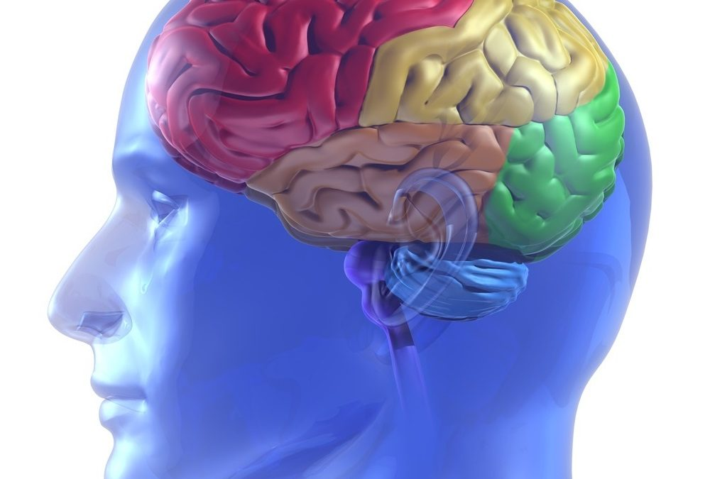 Nervi cranici – oculomotore, trocleare e abducente