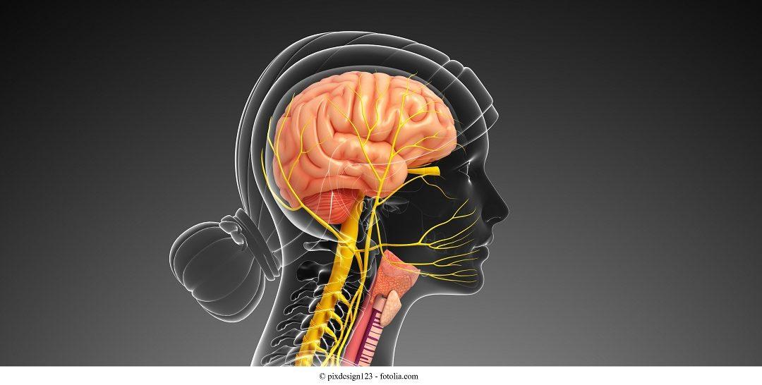 Nervo vago, accessorio e ipoglosso