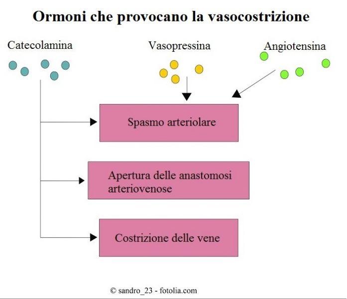 ormoni-vasocostrizione-vasopressina-angiotensina