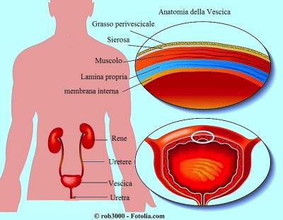 Vescica,dolore,reni,uretra,ureteri