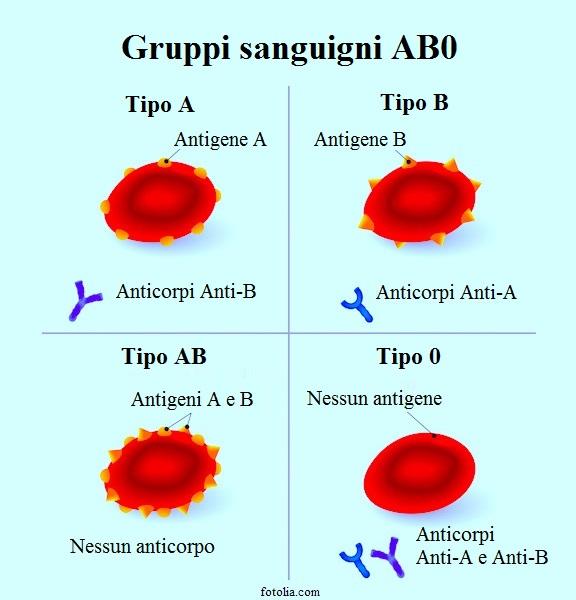 Gruppo sanguigno, antigene, anticorpo, tipo, A, B, 0, AB