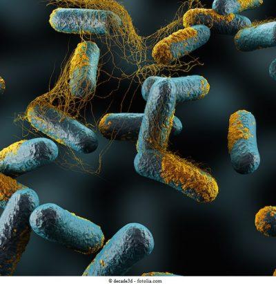 Clostridium-Perfringens