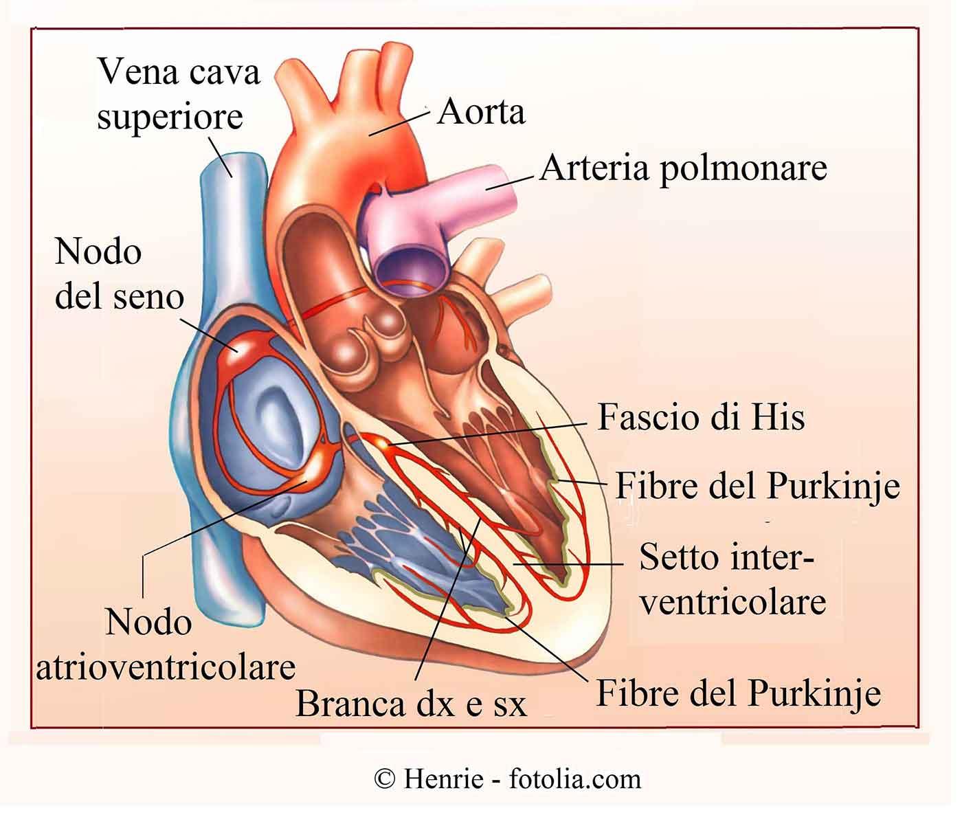 Aritmia cardiaca sinusale