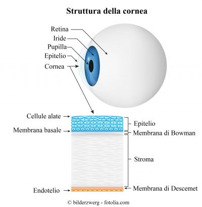 cornea-epitelio-membrana-endotelio