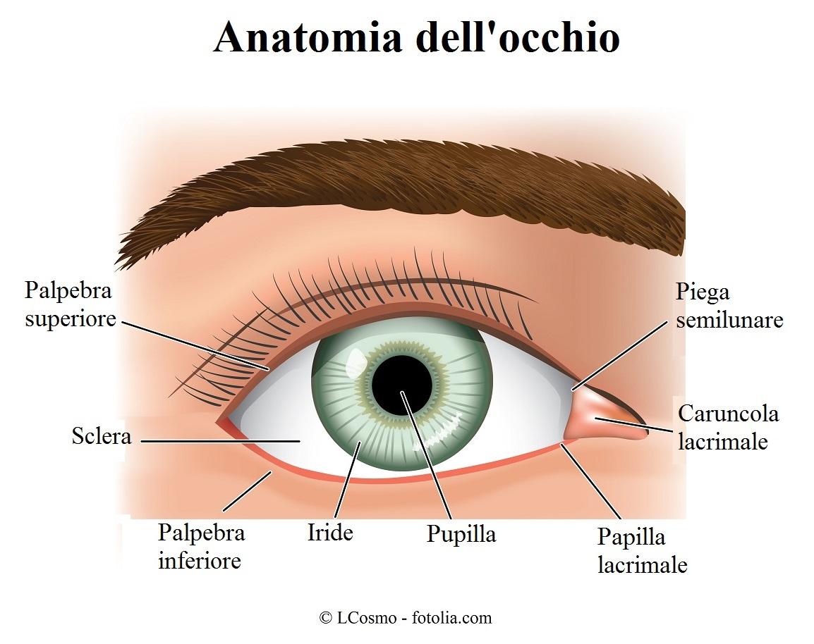 occhio-caruncola-lacrimale