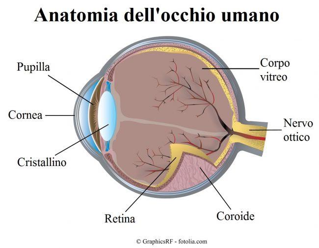occhio-retina-coroide-nervo-ottico
