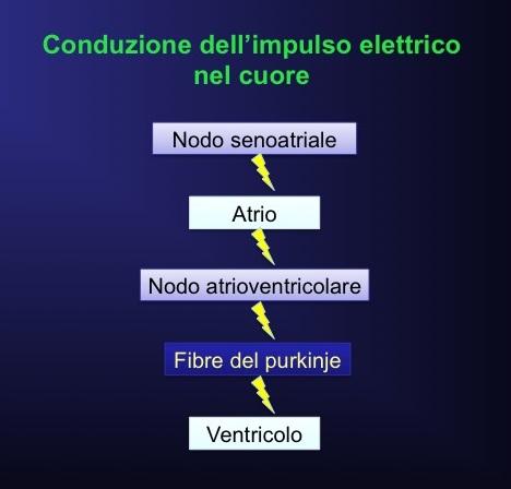 nodo-senoatriale-atrioventricolare-impulso