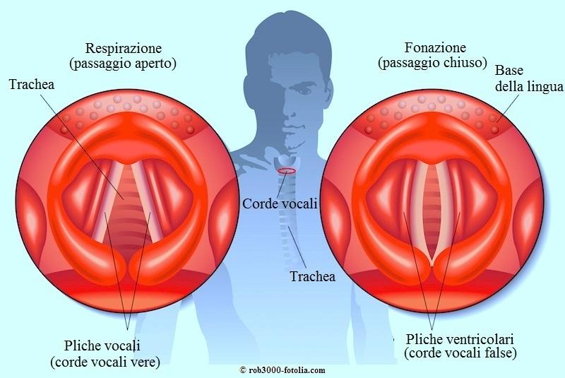 Corde-vocali