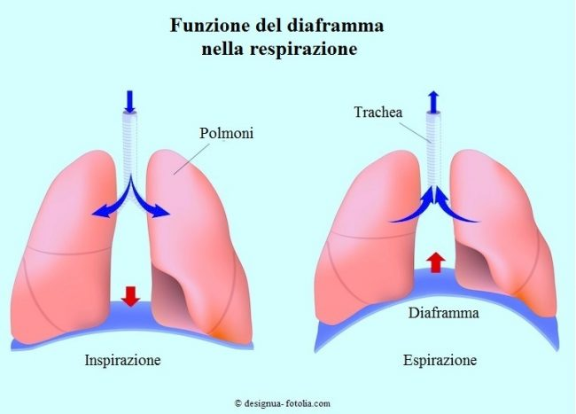 Diaframma-respirazione