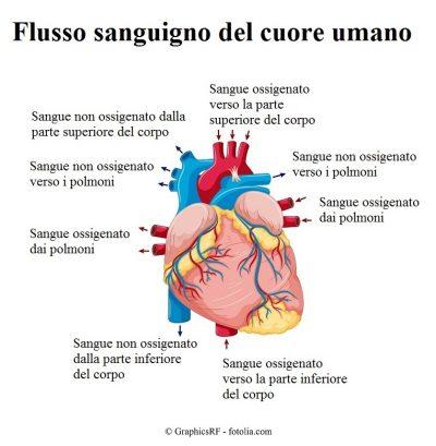 Flusso-sanguigno-cuore-arterie