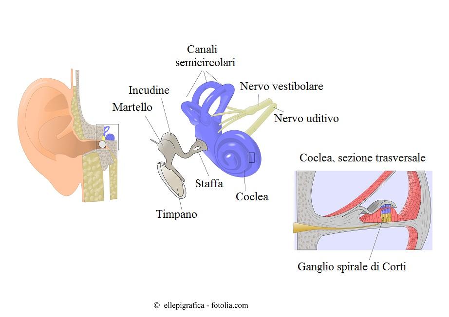Orecchio-interno