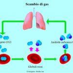 Scambio-di-gas