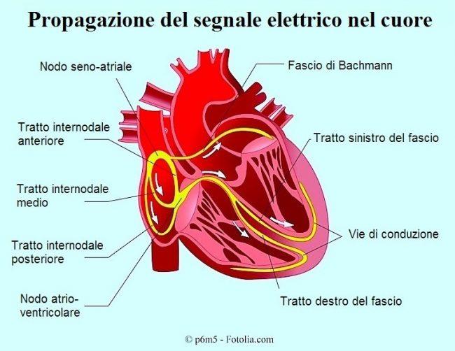 cuore-nodo-seno-atriale-conduzione