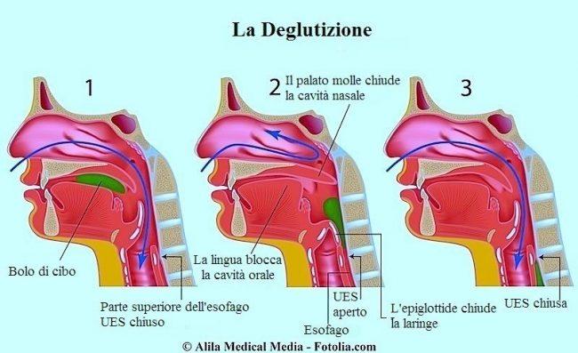 deglutizione-lingua-epiglottide