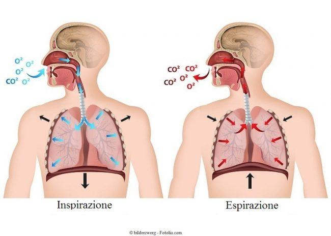 inspirazione-espirazione-ossigeno-anidride-carbonica