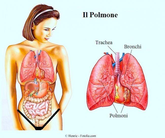 polmone-umano