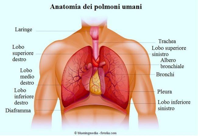 polmoni-lobo-destro-sinistro