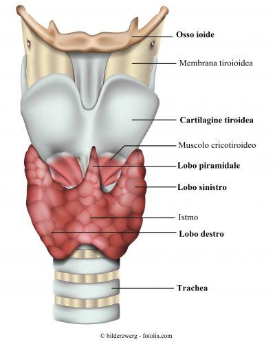 tiroide-lobo-piramidale-destro