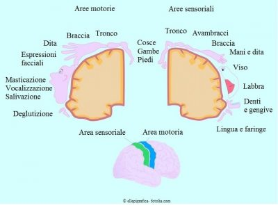 Aree-cervello