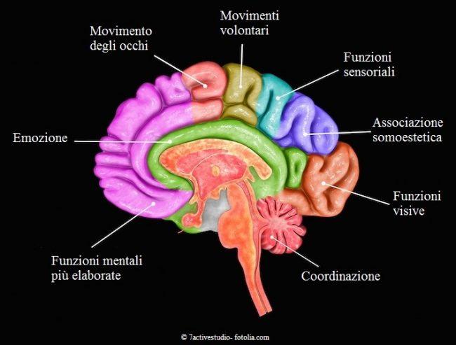 Aree-cervello-funzioni