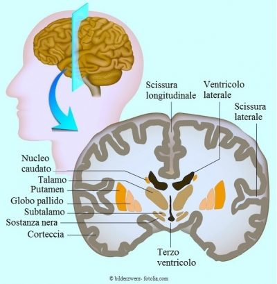 Cervello-talamo-ventricolo