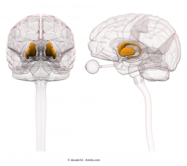 Ganglio-basale