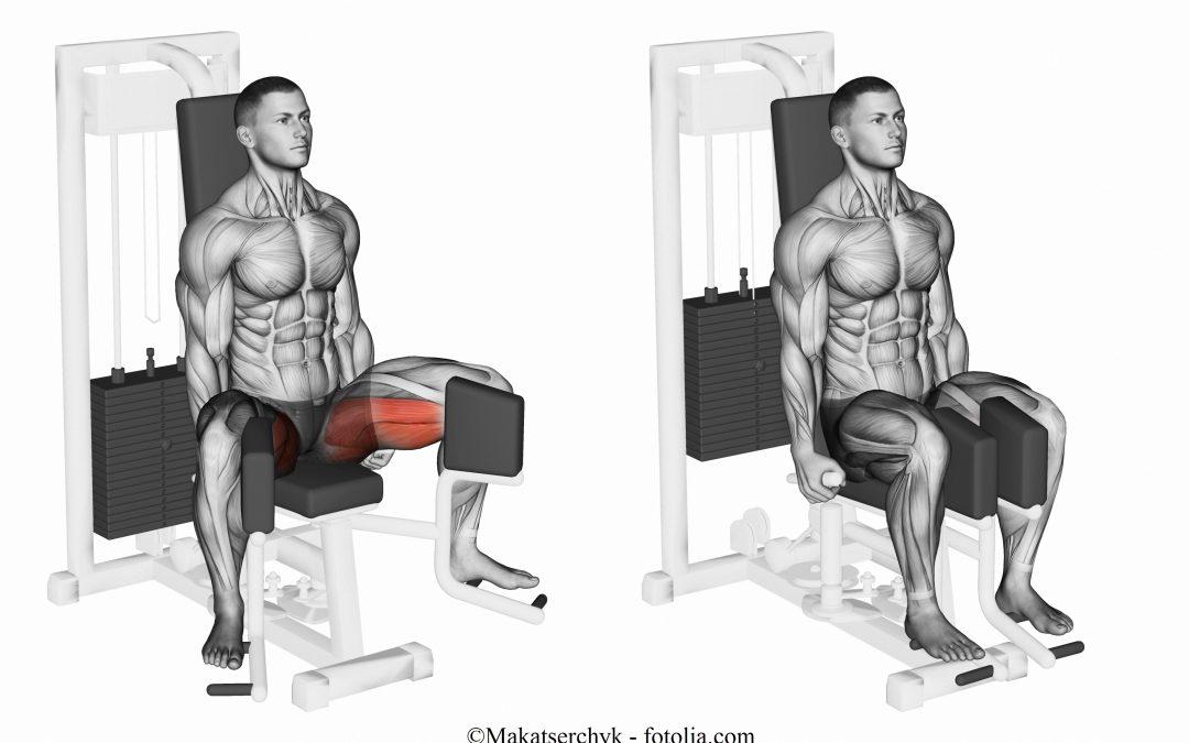 Muscoli adduttori della coscia
