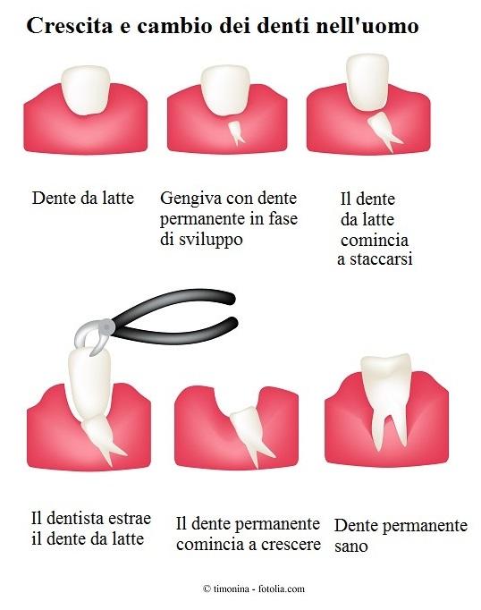 Crescita-denti-latte
