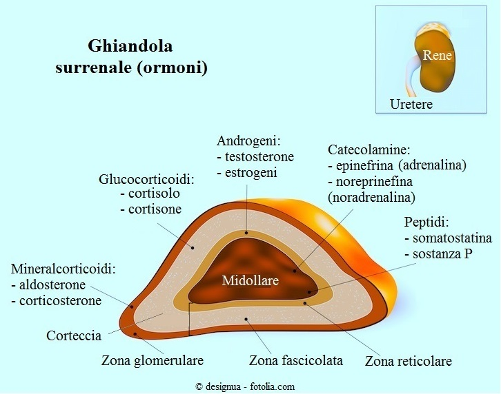 Ghiandola-surrenale