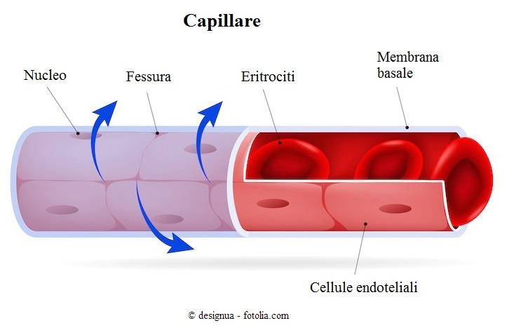 Rottura-dei-capillari-sulle-gambe-rimedi-naturali-gravidanza