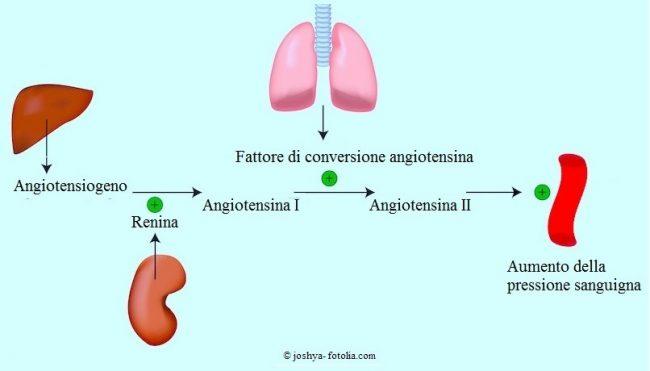 angiotensina-II
