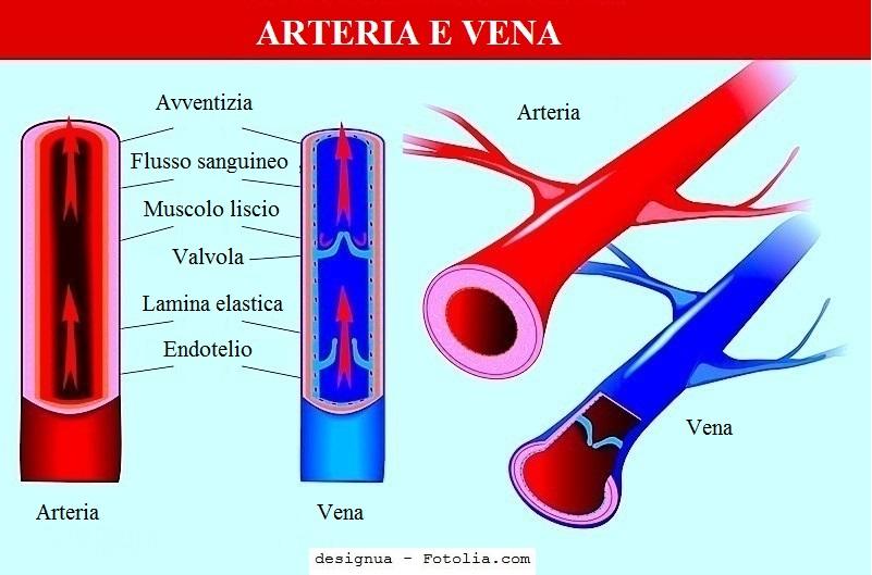 arteria-vena