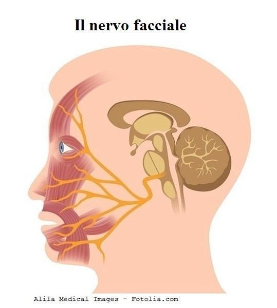 nervo-faciale